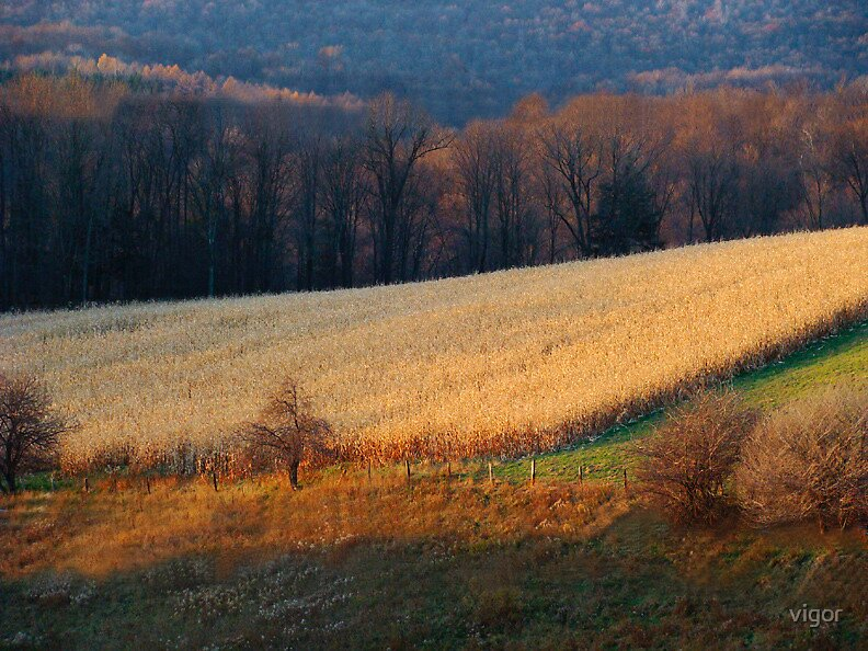 November Evening in Pennsylvania by vigor