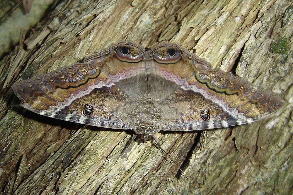 Mariposa - Moth by AluisioRibeiro