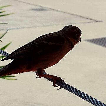 Bird On A Wire by HeadacheMachine