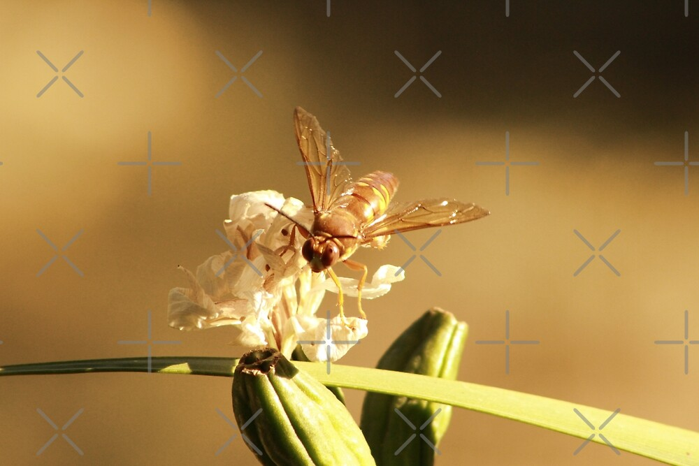 Cicada Hornet on Iris in Sepia by Colleen Cornelius