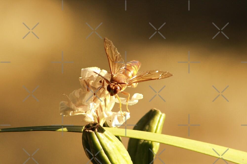 Cicada Hornet on Iris in Sepia by Colleen Cornelius