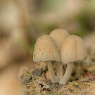mushrooms by Nicole W.