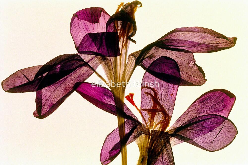 Purple Petals by elisabeth tainsh