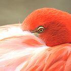 Flamingo eye from Zoo  by loiteke