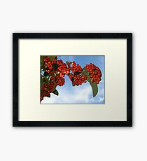 Colorful Berries for Christmas Framed Print