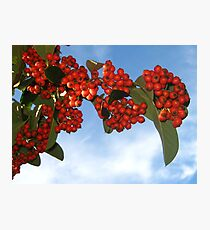 Colorful Berries for Christmas Photographic Print