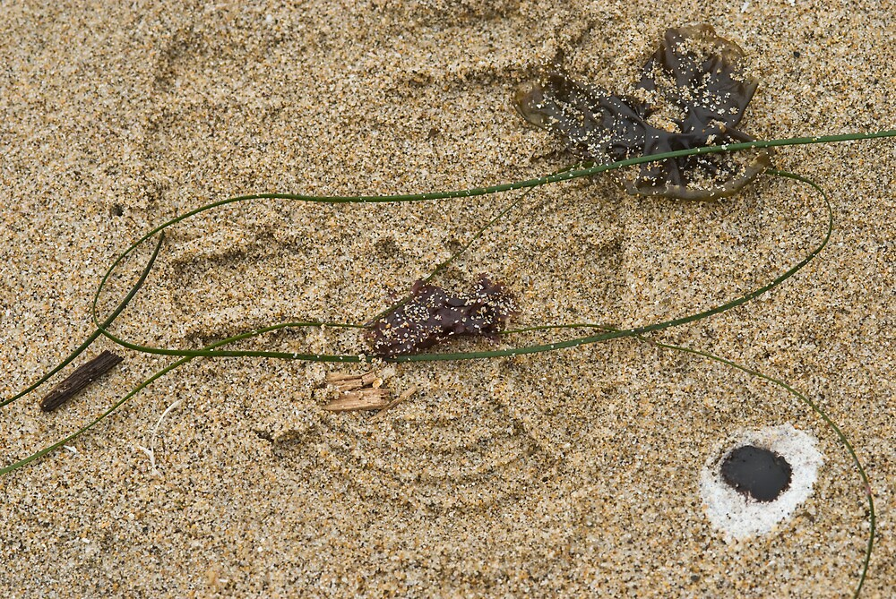 Footprints in Sand by Cathy P. Austin