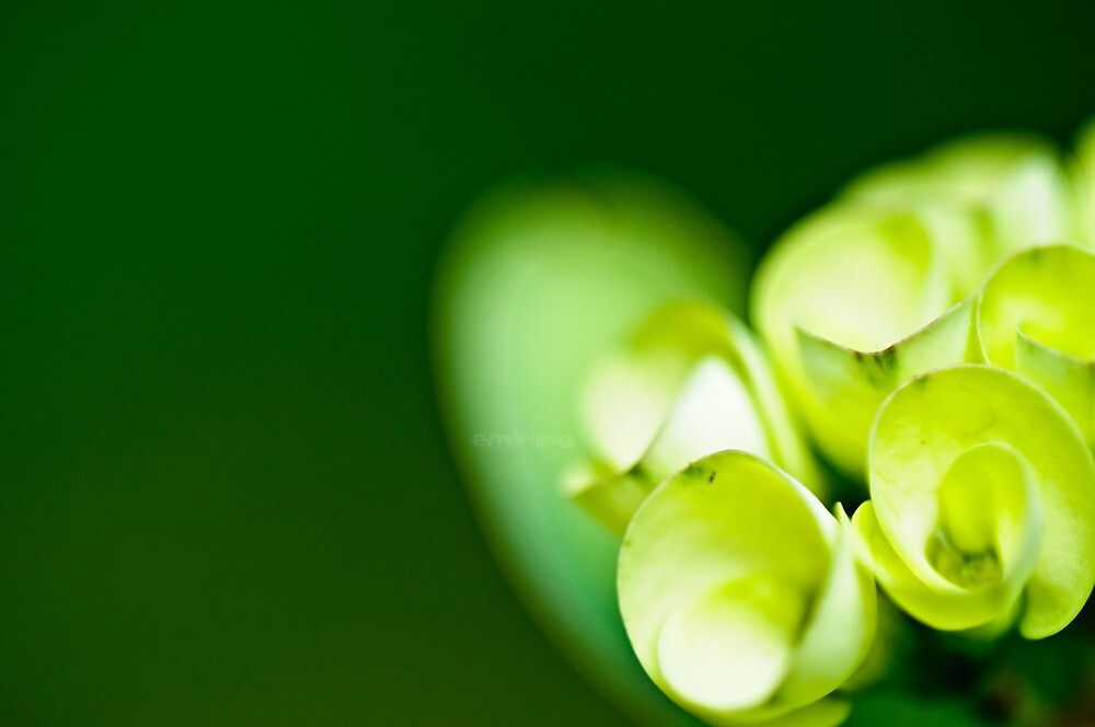 Green and Green by emwing