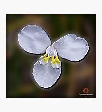 D1G1TAL-M00DZ ~ FLORAL ~ White Flag Iris by tasmanianartist Photographic Print