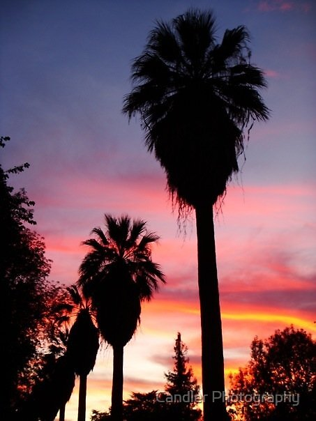 Palm Ave Sunset by Candler Photography