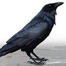 Raven by Sev4