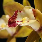 Lush Green and Red Orchid by Joy Watson