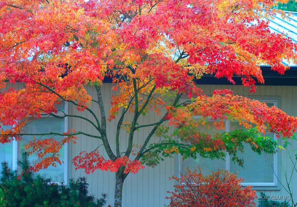 Leaf Study Number 12: Like A Rainbow by Greg German