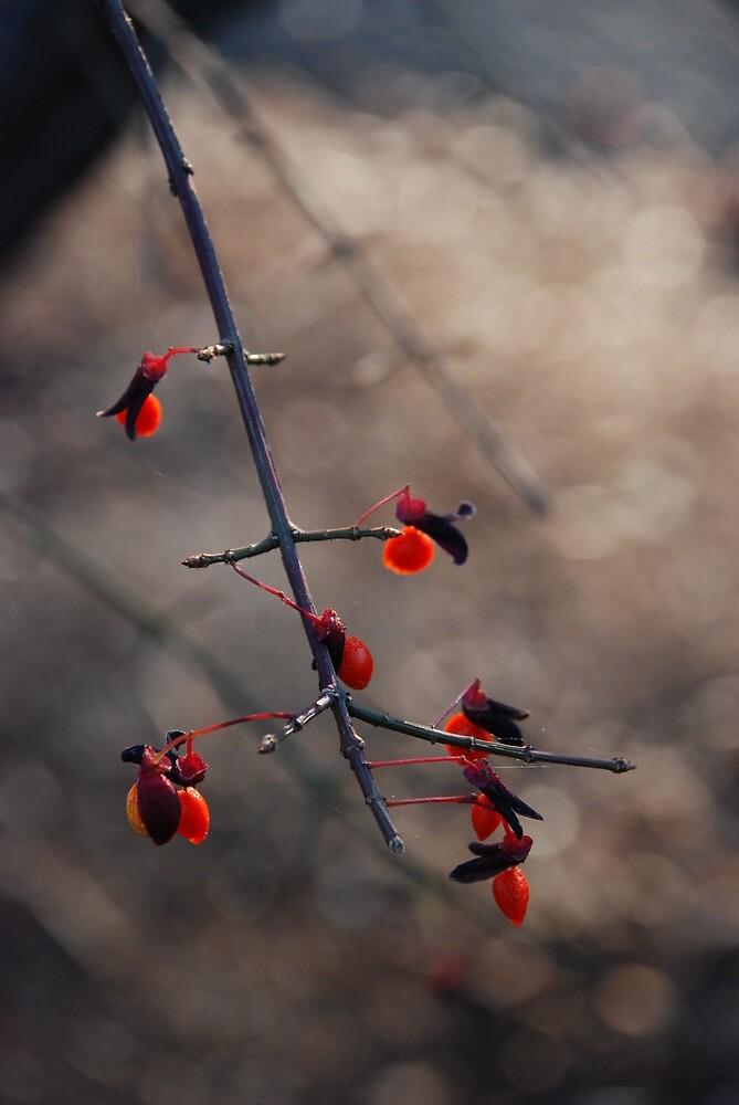 Hanyu by Nathanael Dewhurst