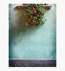 Geraniums on a wall Photographic Print