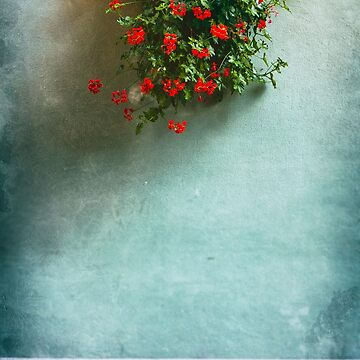 Geraniums on a wall by sil63