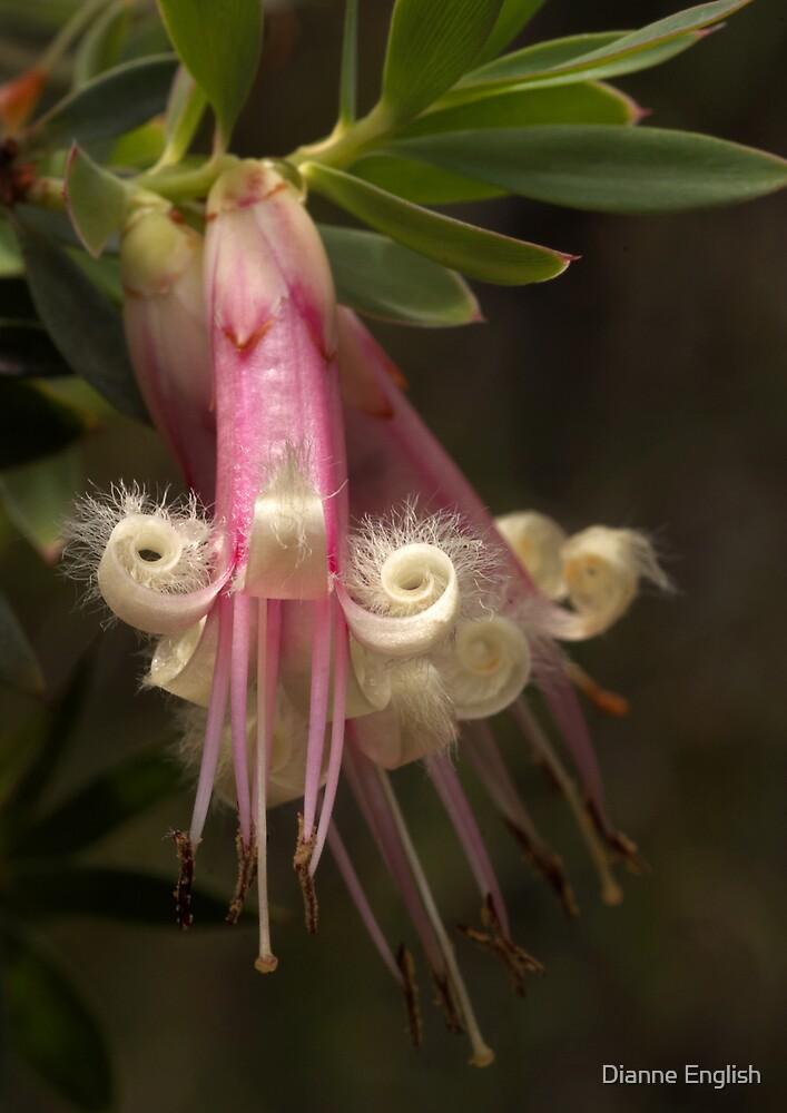 Five Corners (Styphelia triflora) by Dianne English