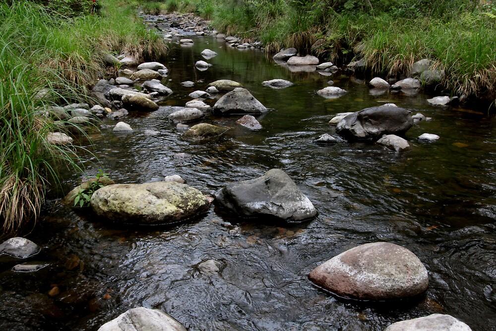 Creek Ilinbah Circuit by smallan