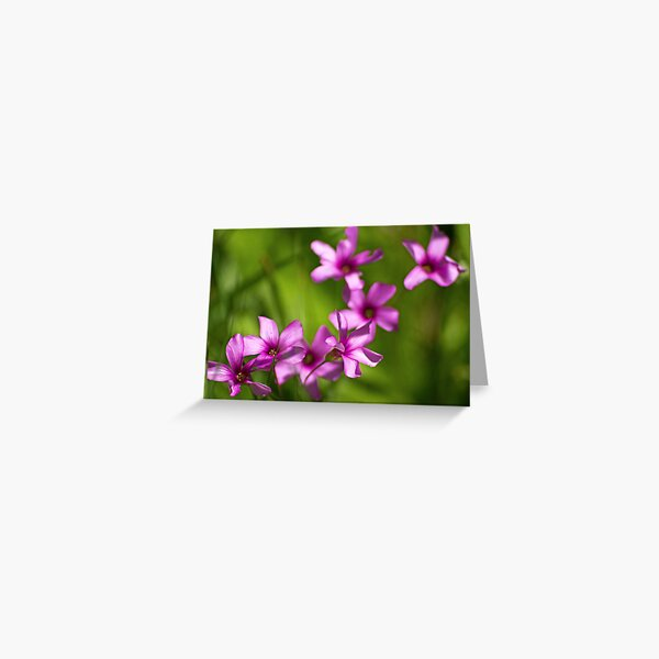 Those Pretty Little Things Greeting Card