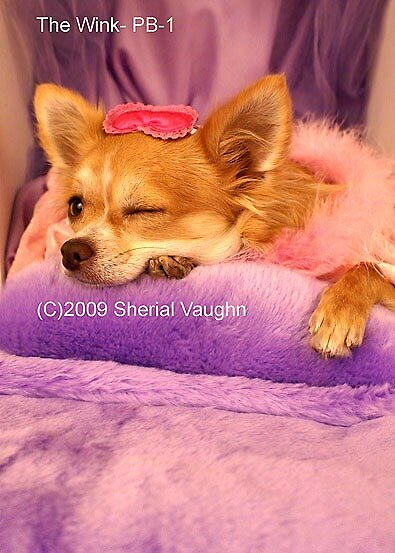 The Wink by Sherial Vaughn