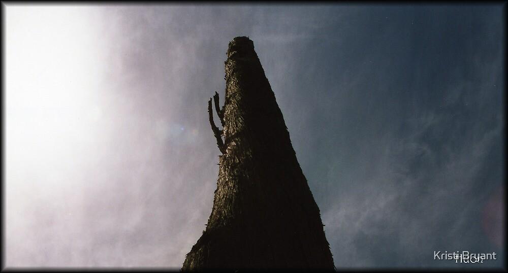 Huon Pine by Kristi Bryant