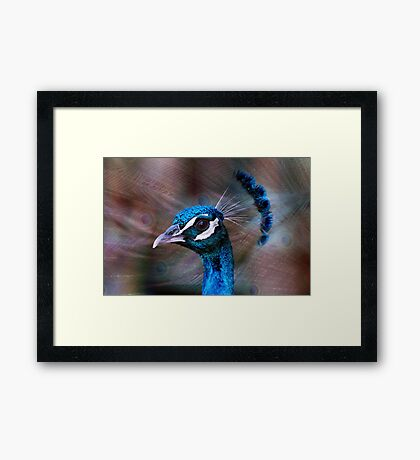 Mr Peacock up Close  Framed Print
