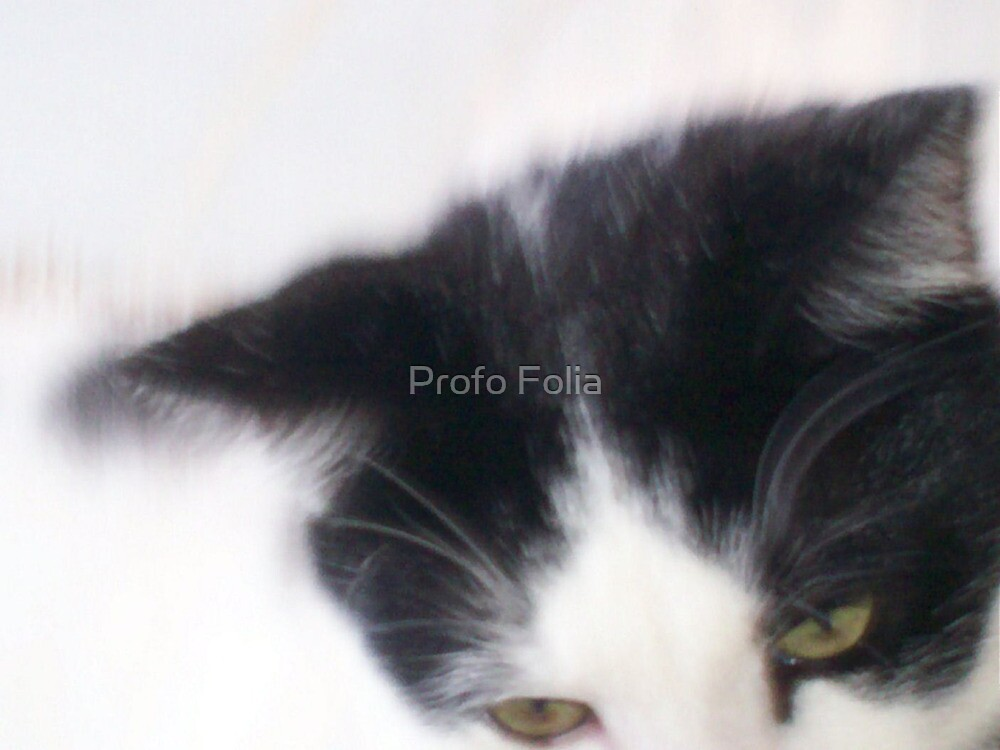 cats eyes by Profo Folia