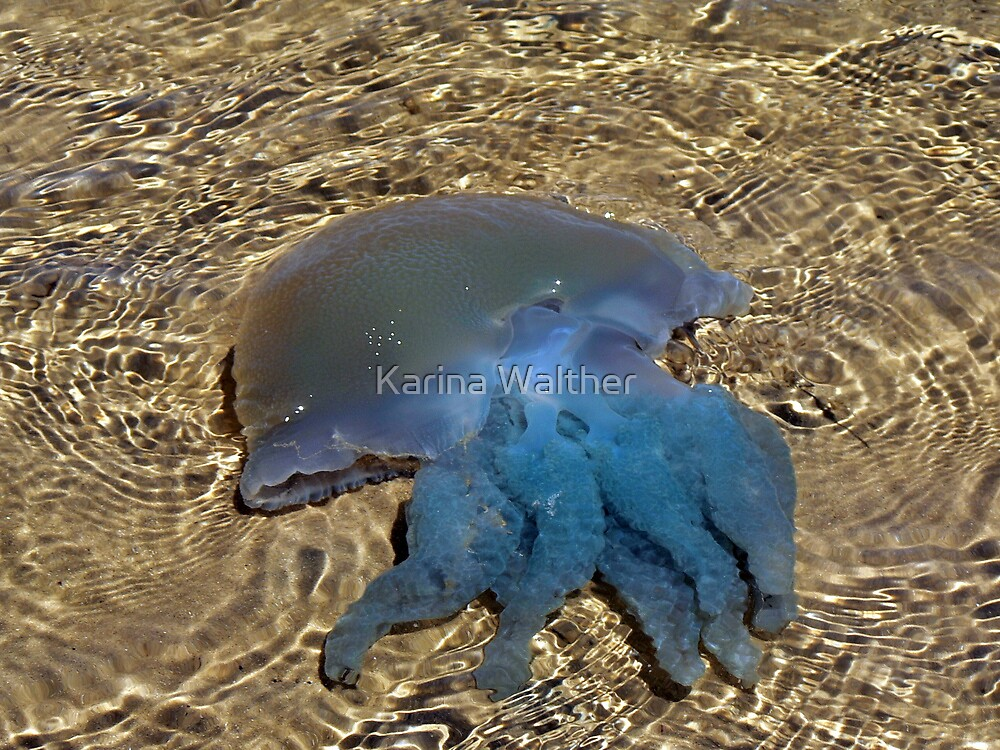 The Jelly Parade by Karina Walther