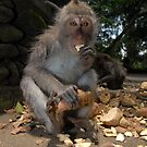 Monkey meal  by Stephen Colquitt