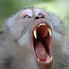Monkey fang by Stephen Colquitt