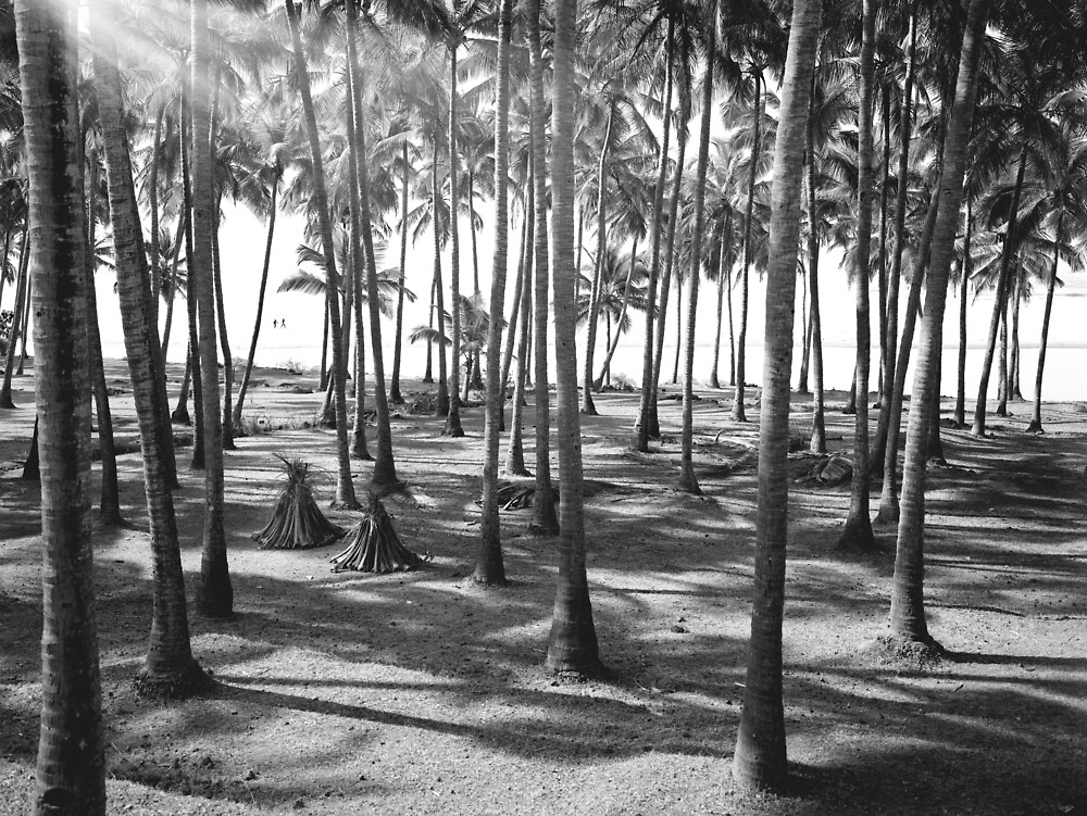Goa beach and palm trees. From a 10x8 negative by violetstar