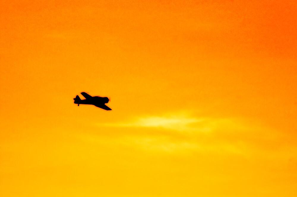 Flight by Lynette Higgs