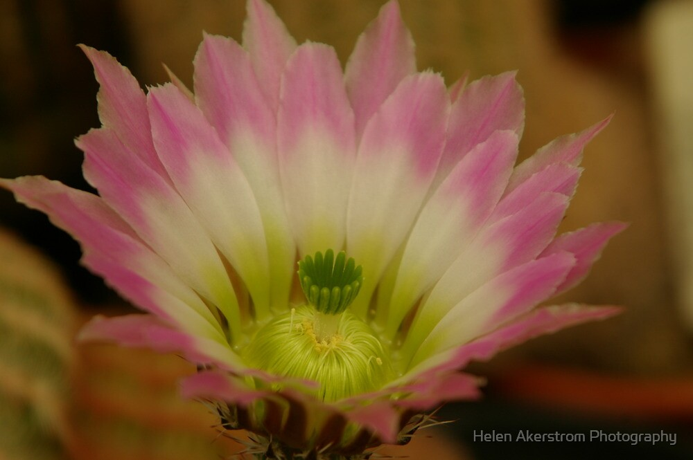 CACTUS # 9 by Helen Akerstrom Photography