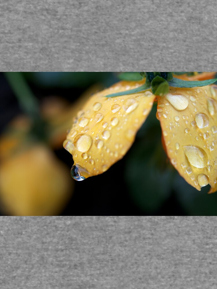 Raindrops on orange pansies by GreenNote