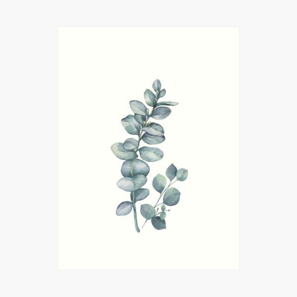 Eucalyptus Twig Art Print