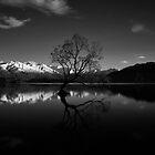 This special Tree in B&W......Lake Wanaka.....New Zealand by Imi Koetz