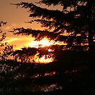 Sunset Through the Pines by DVnJD