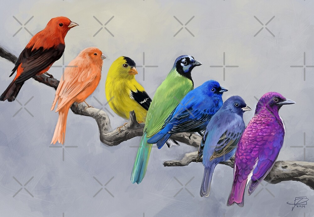 Birds of all Colors by Jeff Powers Illustration