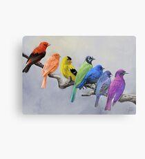 Vögel aller Farben Metalldruck