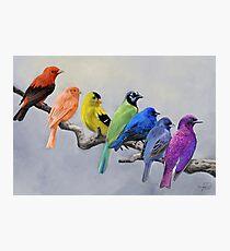 Lámina fotográfica Aves de todos los colores
