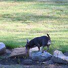 Digger Rock hopping by DVnJD