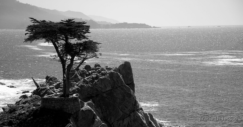 The Lone Cypress by Tracie D. Jessop
