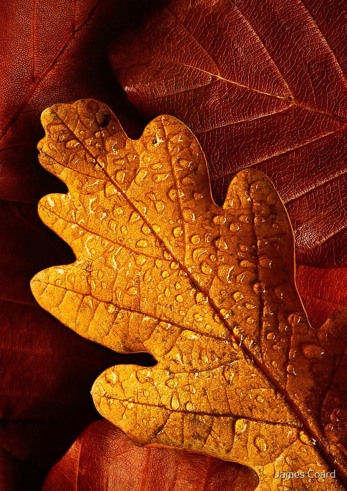 Oak and Beech by James Coard