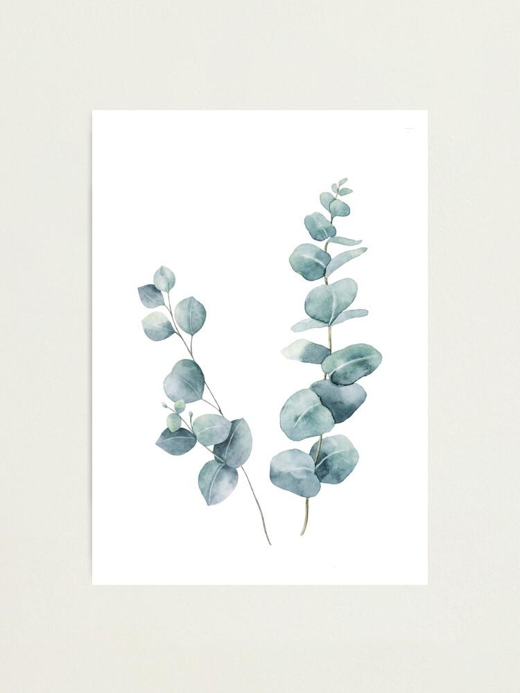 Alternate view of Eucalyptus Leaves Photographic Print