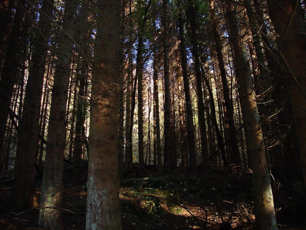 tree land by leonie7