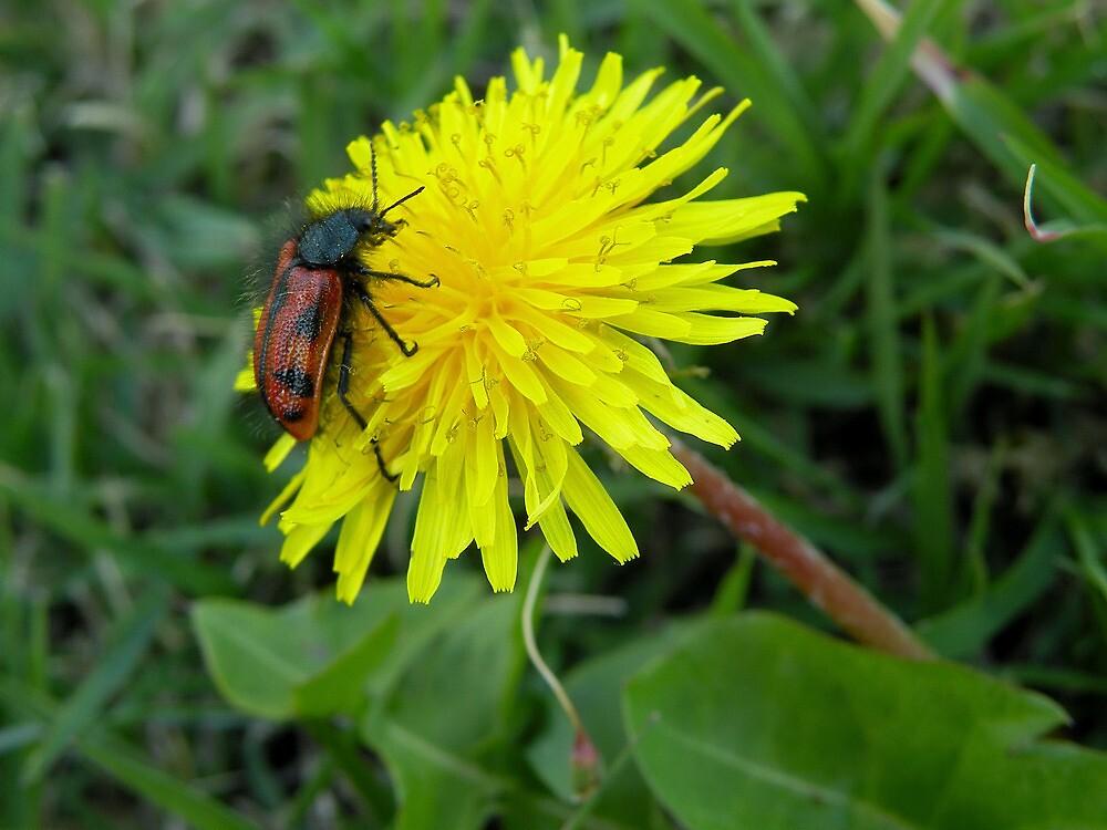 El insecto y la flor... by cieloverde