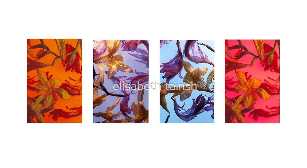 fresia series by elisabeth tainsh
