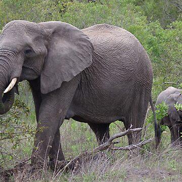 Elephant & Calf - WildAfrika by WildAfrika