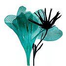 Blue by elisabeth tainsh