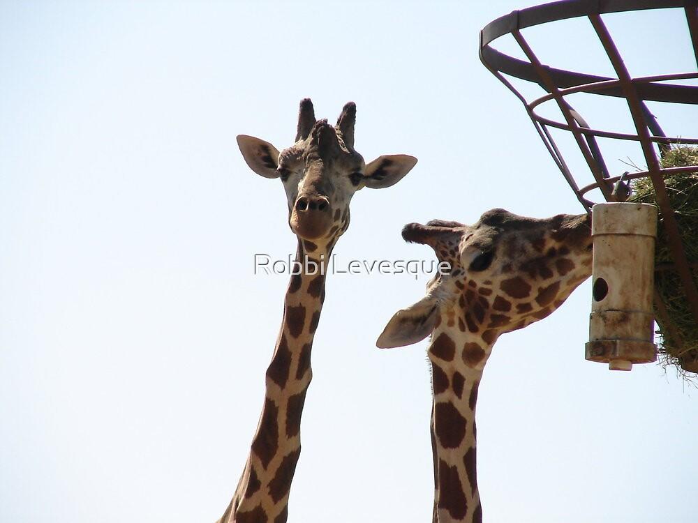 Giraffes by down23